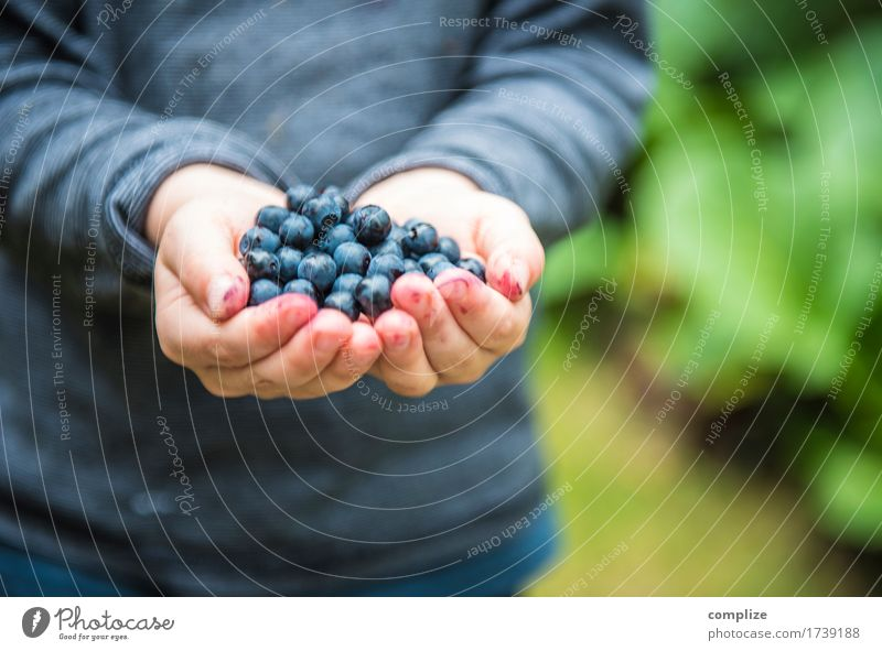 in the blueberry forest Food Fruit Nutrition Eating Breakfast Lunch Dinner Picnic Organic produce Vegetarian diet Healthy Healthy Eating Life Vacation & Travel