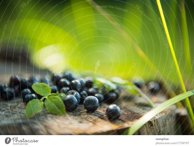 blueberries Food Fruit Cake Nutrition Eating Breakfast Lunch Picnic Organic produce Vegetarian diet Plant Grass Bushes Relaxation To enjoy Blueberry Berries