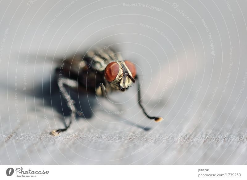 at the start Environment Nature Animal Wild animal Fly Animal face 1 Brown Gray Compound eye Sit Insect Colour photo Exterior shot Close-up Detail