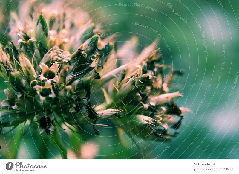 Nature Plant Summer Calm Loneliness Meadow Grass Dream Sadness Elegant Esthetic Bushes Soft Kitsch Observe