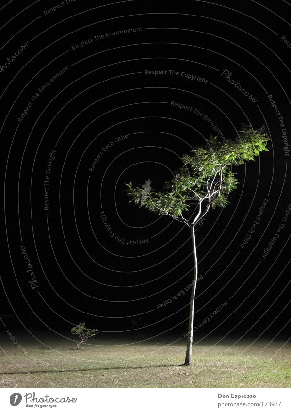 Nature Tree Grass Garden Park Environment Surrealism Night shot