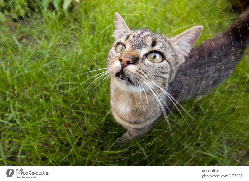 Nature Joy Animal Life Garden Cat Park Power Environment Esthetic Animal face Observe Joie de vivre (Vitality) Pelt Curiosity Paw
