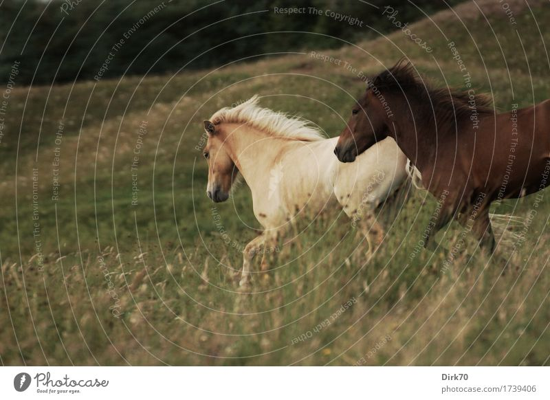 Nature Beautiful Animal Life Meadow Natural Grass Freedom Wild Power Energy Joie de vivre (Vitality) Horse Pasture Passion