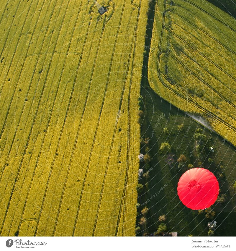 Nature Tree Sun Plant Red Summer Yellow Far-off places Meadow Freedom Air Earth Field Environment Flying