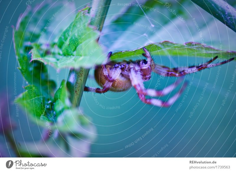 spider Environment Nature Landscape Animal Plant Leaf Foliage plant Wild animal Spider 1 Exceptional Exotic Creepy Emotions Fear Horror Dangerous Respect