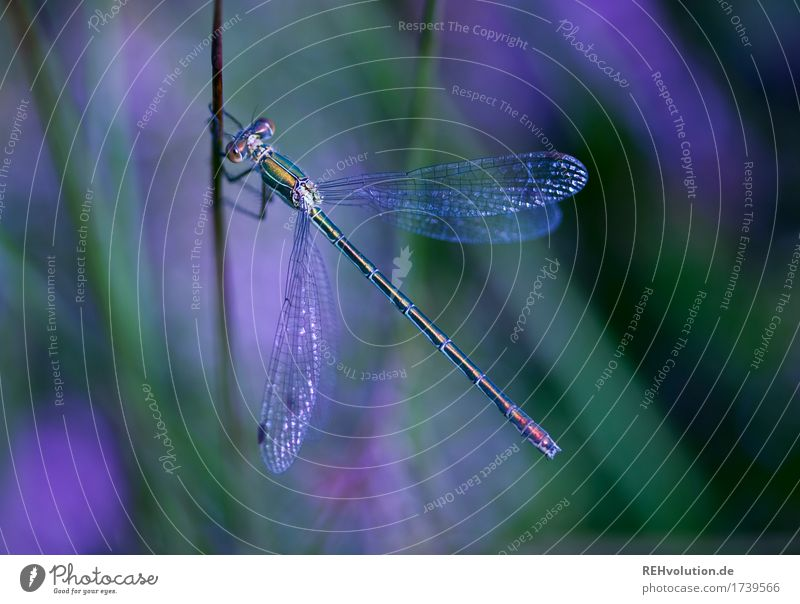 dragonfly Environment Nature Animal Summer Plant Pond Dragonfly Insect 1 Violet Colour photo Exterior shot Close-up Detail Macro (Extreme close-up) Day Shadow
