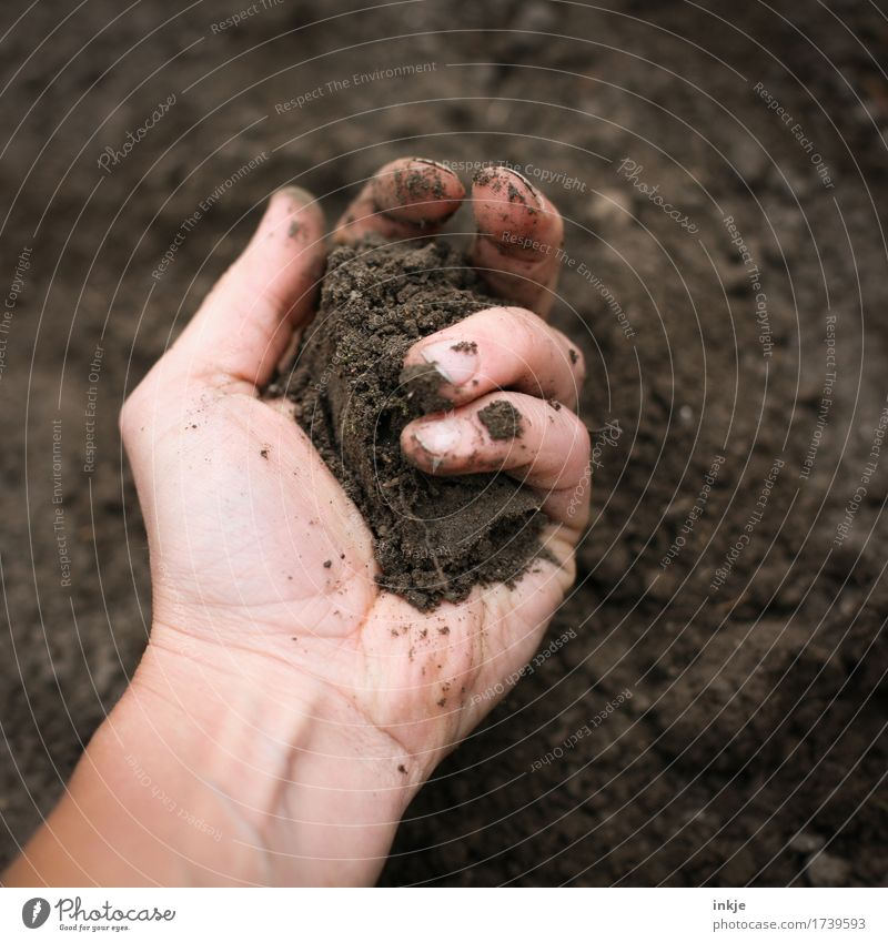 Human being Nature Hand Adults Life Natural Brown Earth Dirty Soft Elements To hold on Gardening Senses Take Dig