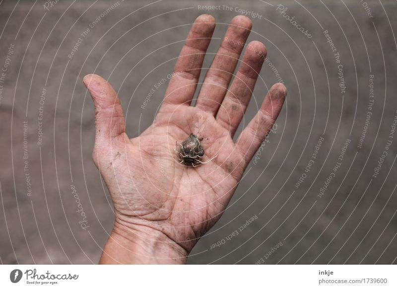 Human being Summer Hand Spring Autumn Natural Small Brown Growth Dirty Individual To hold on Gardening Palm of the hand Bulb flowers