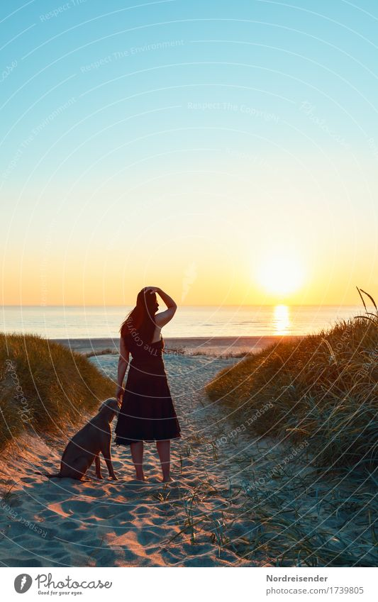 Woman Human being Vacation & Travel Nature Dog Summer Landscape Ocean Calm Far-off places Beach Lifestyle Adults Feminine Grass Tourism
