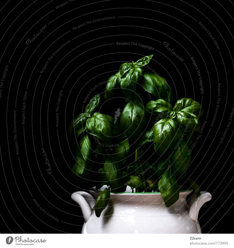 homegrown Colour photo Studio shot Central perspective Food Herbs and spices Plant Foliage plant Pot plant Fresh Healthy Basil Green Metal Contrast Reduced