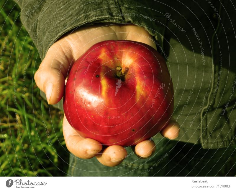 Human being Child Hand Red Life Meadow Nutrition Food Boy (child) Garden Healthy Infancy Contentment Fruit Skin Hiking