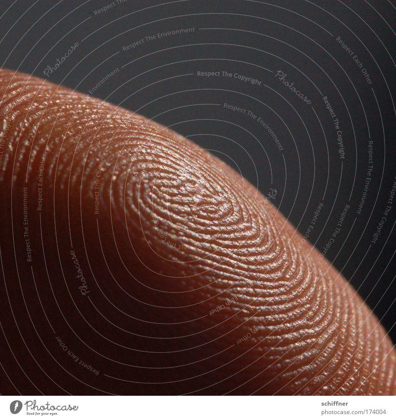 Human being Hand Skin Fingers Arrangement Near Uniqueness Thumb Arch Maze Whorl Fingerprint Fingertip