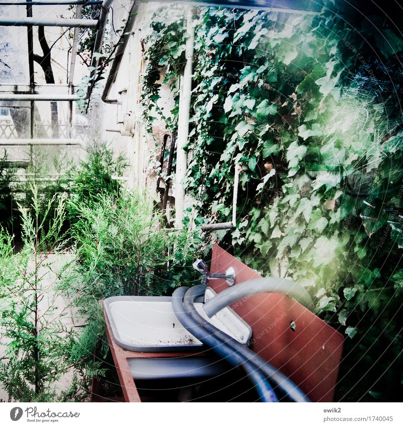 greenhouse effect Bushes Foliage plant Wild plant Pot plant Ivy Creeper uncontrolled growth Building Greenhouse Glas facade Sink Wall (barrier) Wall (building)