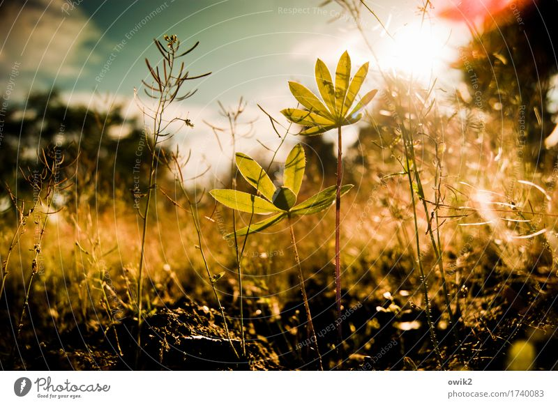 Sky Nature Plant Clouds Leaf Environment Life Spring Small Together Illuminate Growth Idyll Bushes Climate Joie de vivre (Vitality)