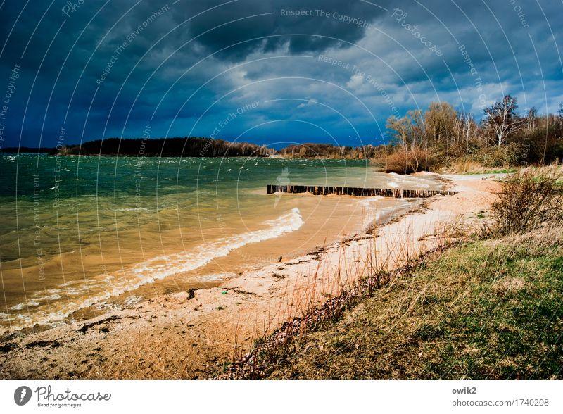 Nature Plant Water Tree Landscape Dark Environment Cold Autumn Grass Coast Lake Wild Rain Horizon Waves