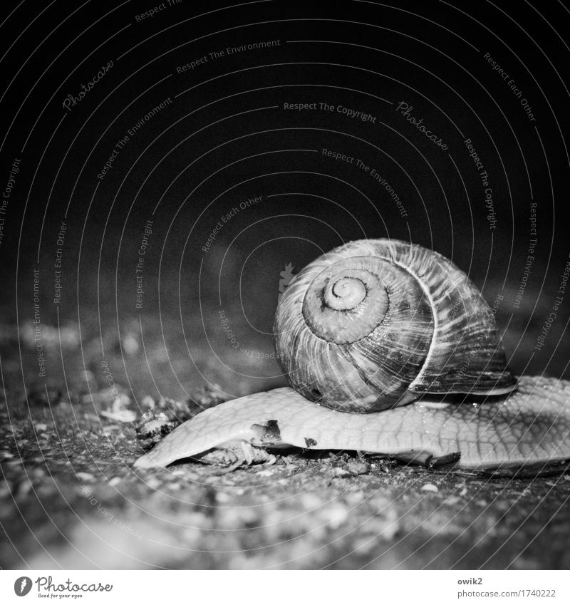 Nature Animal Dark Environment Life Speed Threat Near Serene Watchfulness Snail Patient Endurance Attentive Indifferent Snail shell