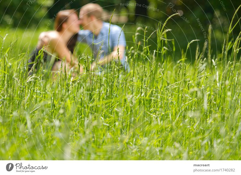 spring fever Couple Love Emotions Spring fever Summer Blur Grass Meadow Sit Lovers Affection Man Woman Boy (child) Lady Masculine Feminine Nature Exterior shot