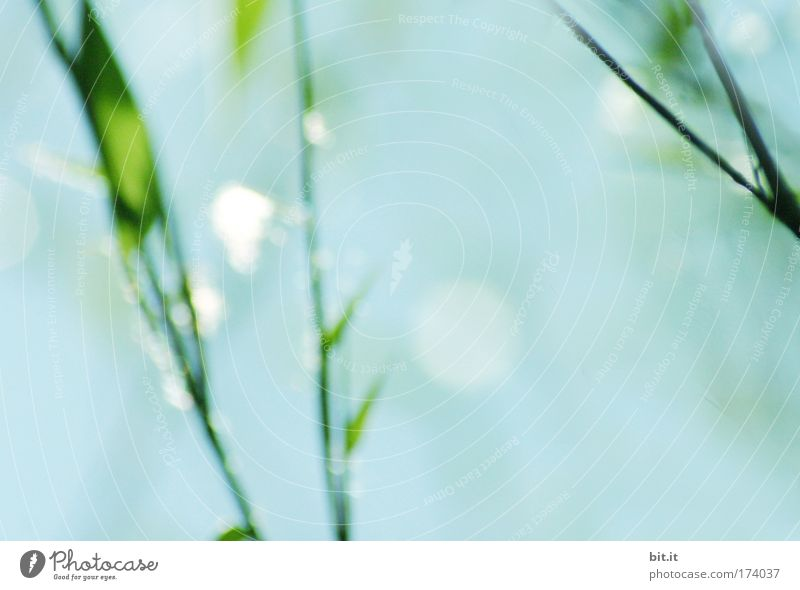 Sky Blue Beautiful Plant Calm Relaxation Grass Glittering Drops of water Natural Bushes Illuminate Dew Harmonious Glimmer