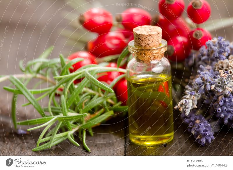 vegetable oil Cooking oil Nature Natural Fat Fatty acid Rosemary Herbs and spices healing oils essential oils Rose hip Dog rose Lavender Food Nutrition