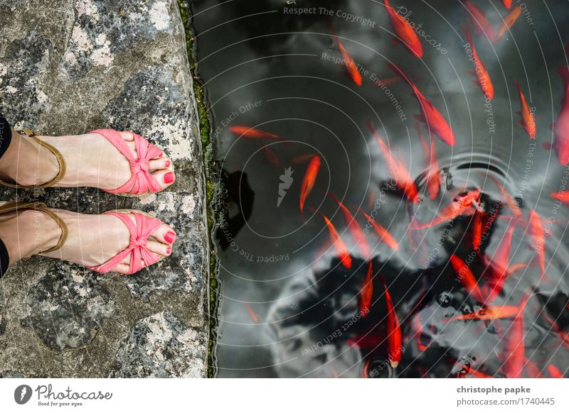 dont feet the fishes Vacation & Travel Trip Feminine Feet 1 Human being Park Pond Lake Footwear High heels Sandal wedges Animal Fish Goldfish Flock Stone