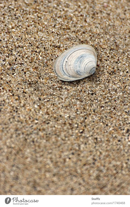 Nature Vacation & Travel Summer Relaxation Calm Beach Environment Small Sand Brown Individual Round Striped Sandy beach Mussel Beige