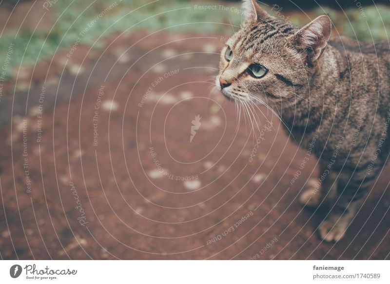 observantly Nature Animal Pet Cat 1 Small Domestic cat Watchfulness Cat's head Copy Space left Shallow depth of field Whisker Eyes Green Terrace Pave Looking