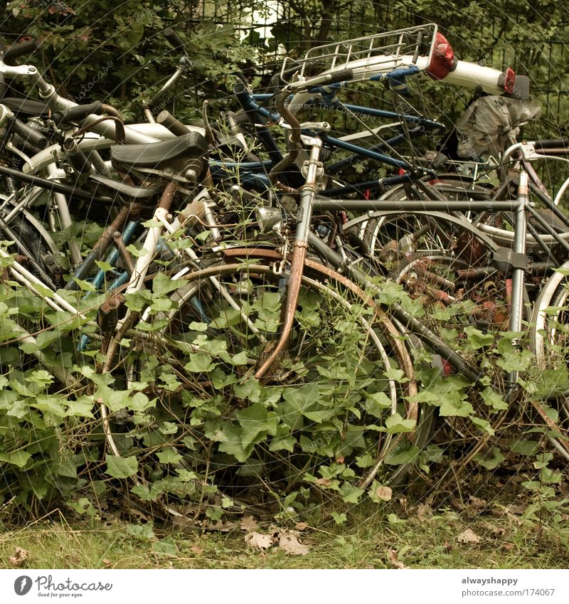 quasi gold Colour photo Exterior shot Deserted Day Environment Grass Ivy Means of transport Bicycle Metal Whimsical Logistics Sadness Environmental pollution