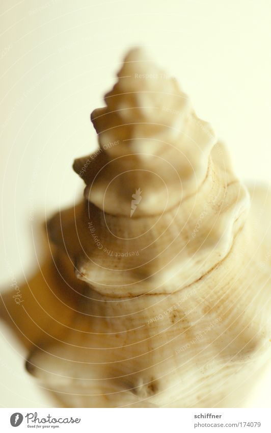 Nature Beautiful Ocean Animal Environment Safety Protection Mussel Smooth Curved Whorl Snail shell Rotated Marine animal Mussel shell