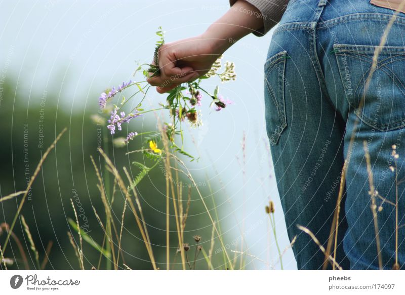 Nature Hand Sky Sun Flower Summer Meadow Grass Pants