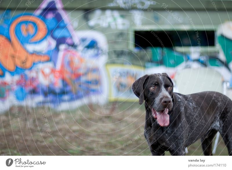 City Animal Dog Graffiti Brown Cool (slang) Pet Dugout Hound Youth culture Urbanization Purebred dog