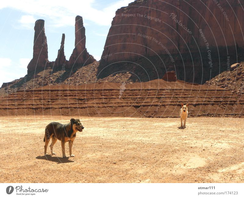 Wild dogs in Monument Valley Colour photo Subdued colour Exterior shot Twilight Shadow Silhouette Long shot Animal portrait Vacation & Travel Adventure