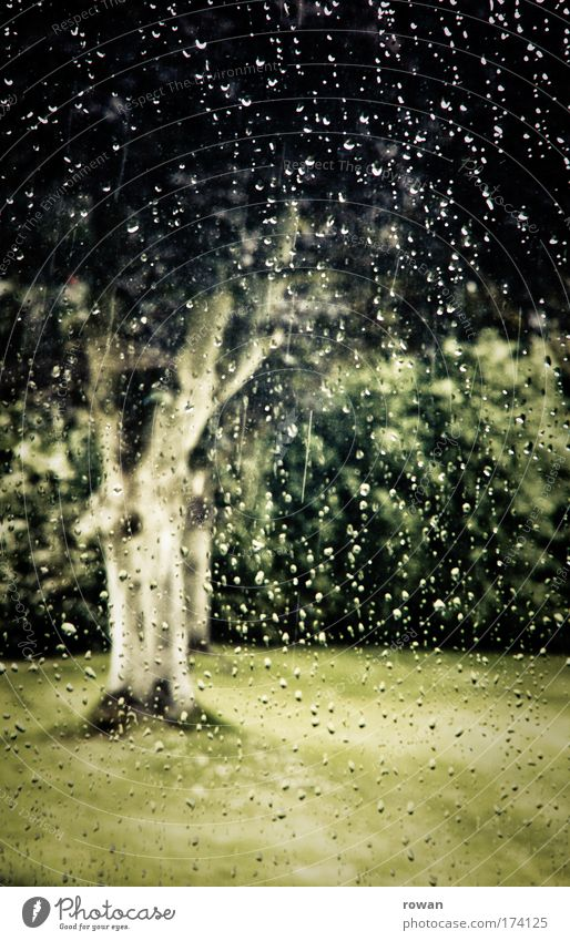 Nature Tree Plant Meadow Grass Sadness Park Rain Wet Growth Drop Longing Thunder and lightning Boredom Damp Storm