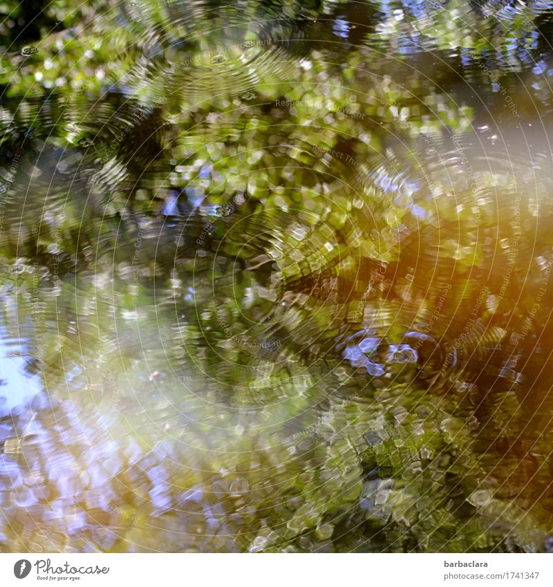 Sound color | Water Climate Tree Leaf Park Pond Lake Blue Green Moody Movement Relaxation Leisure and hobbies Nature Senses Environment Colour photo
