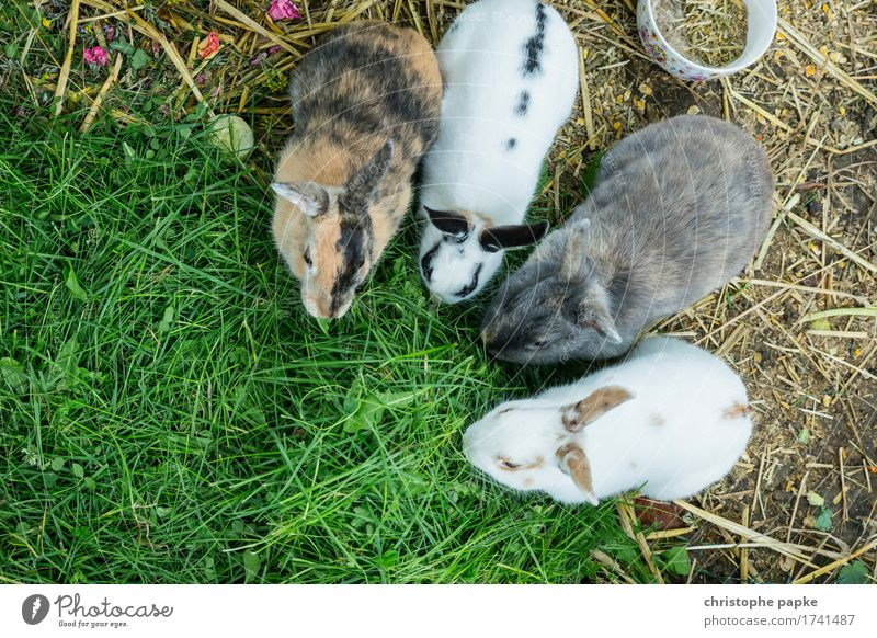 Munchkin Animal Pet Pelt Petting zoo 4 Group of animals To feed Feeding Cute Love of animals Hare & Rabbit & Bunny Eating Grass Colour photo Deserted Day