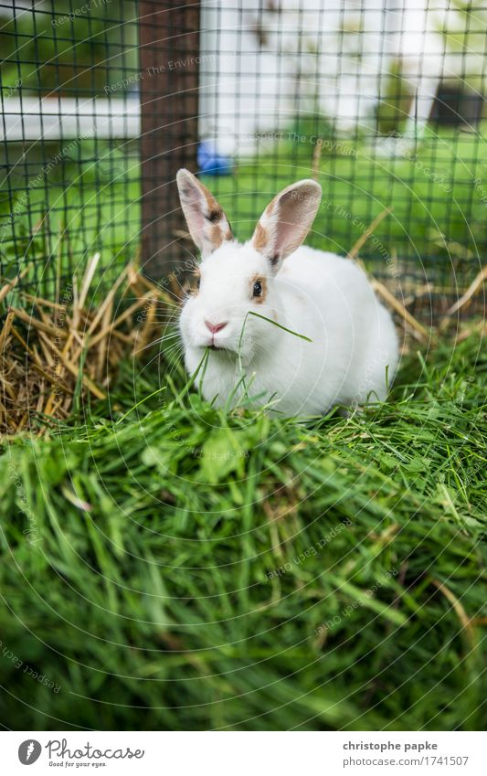 Green preferred Grass Animal Pet Animal face Pelt Hare & Rabbit & Bunny 1 To feed Cute outdoor enclosure Cage Colour photo Exterior shot Shallow depth of field