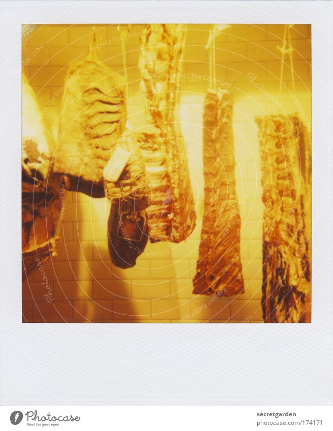 for the vultures with text space below. Colour photo Interior shot Close-up Polaroid Deserted Copy Space bottom Artificial light Flash photo Central perspective