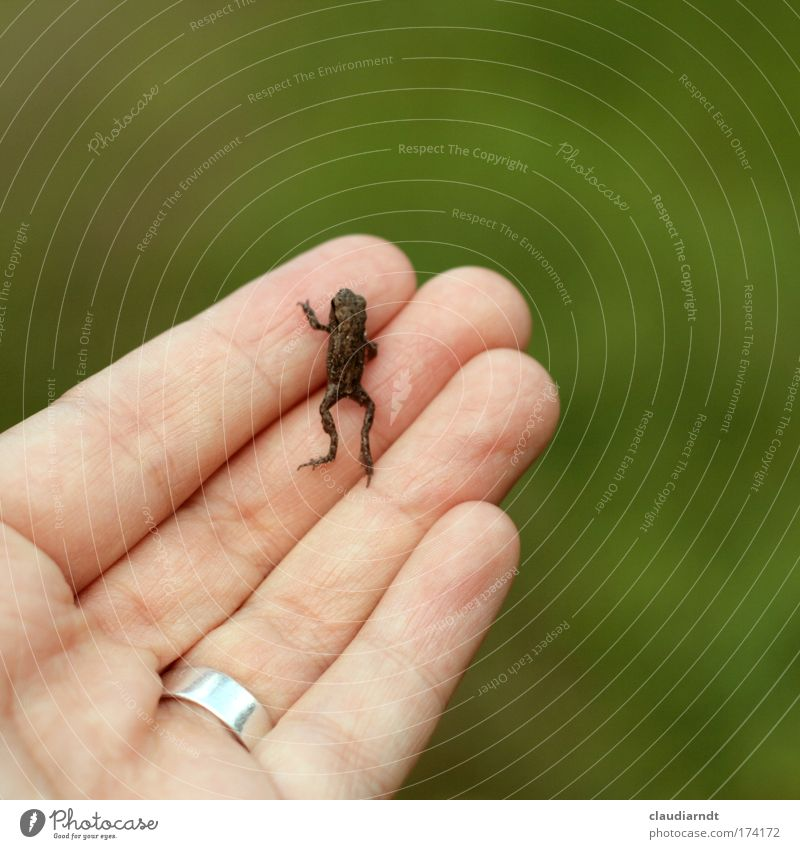 Frog King Colour photo Exterior shot Copy Space right Copy Space top Day Shallow depth of field Hand Fingers Nature Animal Ring Wild animal Painted frog 1