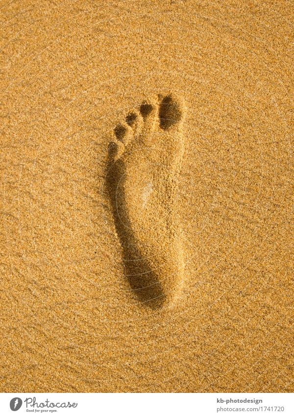 Footprint at the beach in Sri Lanka Relaxation Vacation & Travel Tourism Beach Sand sunny footprint footprints barefoot time-out sight sea sky landscape