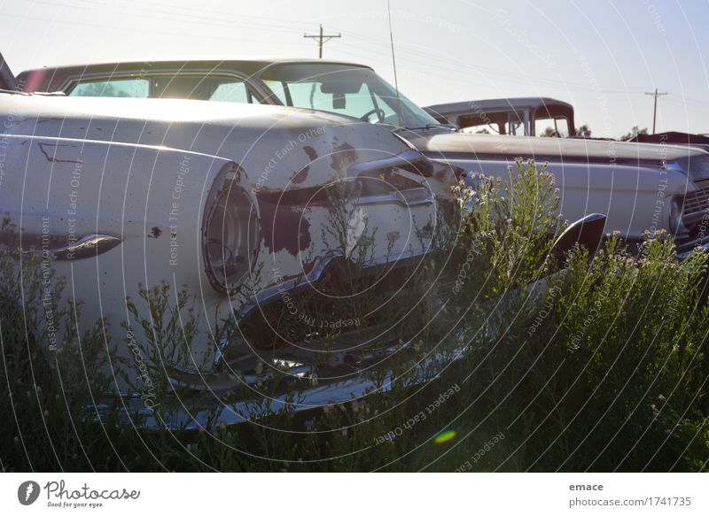 Flowers on car wreck Traffic accident Vehicle Car Vintage car Limousine DeSoto Chevrolet firedomes Wrecked car Road cruiser Old Esthetic Dirty Dark Sharp-edged