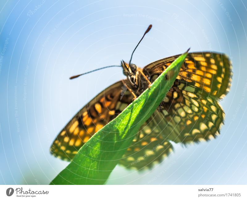 worm's-eye view Nature Animal Sky Sunlight Spring Summer Plant Leaf Meadow Butterfly Wing Insect Feeler 1 To enjoy Near Blue Green Orange Esthetic Contentment