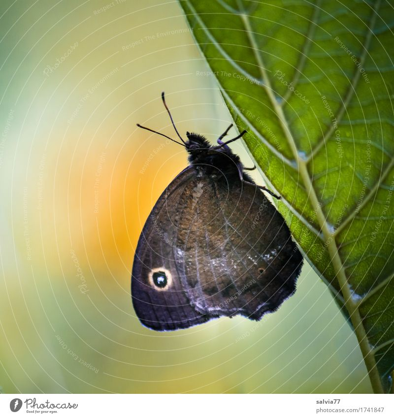 instant Environment Nature Plant Animal Summer Leaf Rachis Wild animal Butterfly Wing Insect Browns Eyes 1 Relaxation Crawl Wait Natural Green Orange Esthetic