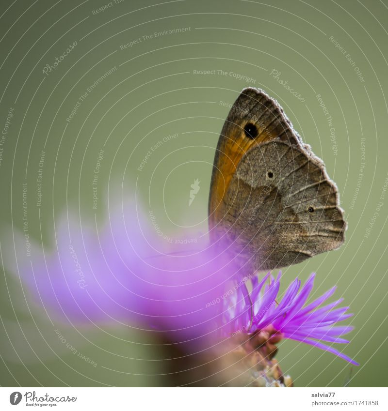 Nature Plant Summer Flower Animal Environment Blossom Love Happy Gray Wild animal Idyll To enjoy Wing Violet Delicious