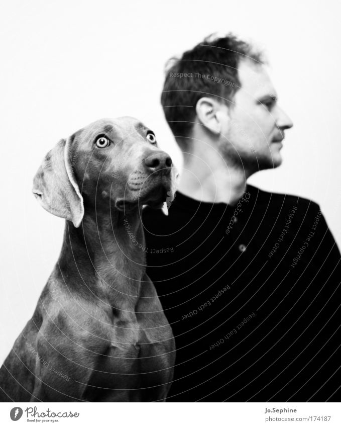 Human being Man Loneliness Animal Emotions Adults Dog Masculine Pelt Relationship Divide Portrait photograph Disappointment Defiant Hound Weimaraner