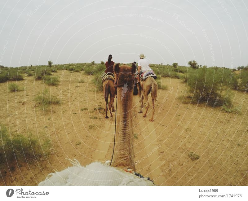 Camel Safari Vacation & Travel Tourism Trip Adventure Far-off places Freedom Expedition Summer Summer vacation Woman Adults Man Environment Nature Landscape