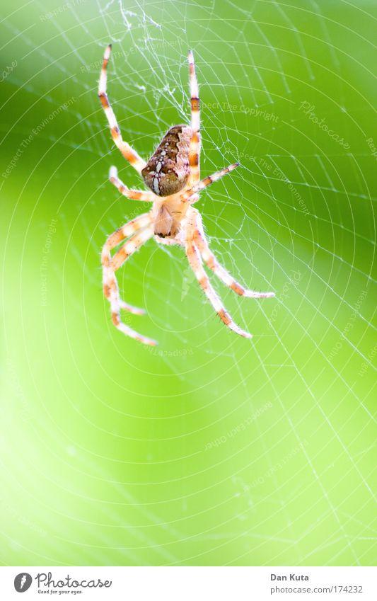 Nature Green Animal Yellow Environment Legs Wait Esthetic Sleep Illuminate Threat Net Thin Creepy Catch Hunting