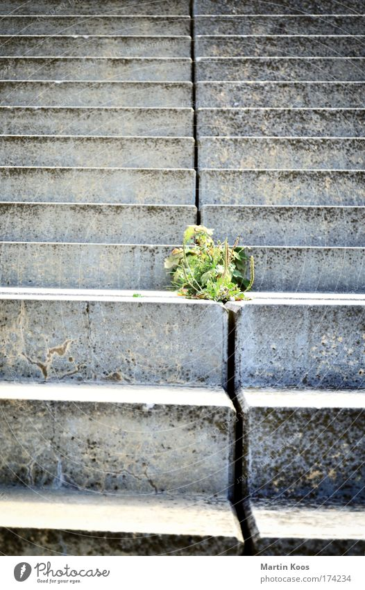 Nature Green City Plant Life Wall (building) Above Freedom Gray Stone Sadness Wall (barrier) Walking Hope Stairs Growth
