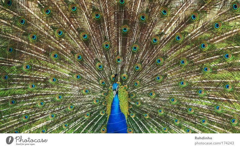 Nature Beautiful Blue Summer Vacation & Travel Animal Meadow Garden Park Dance Glittering Elegant Multicoloured Esthetic Feather Wing