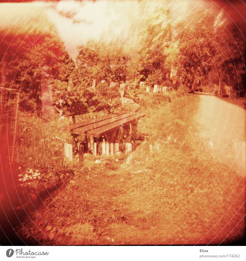be a bank Subdued colour Exterior shot Experimental Lomography Holga Nature Exceptional Bench Double exposure Cemetery Tree Red Lanes & trails