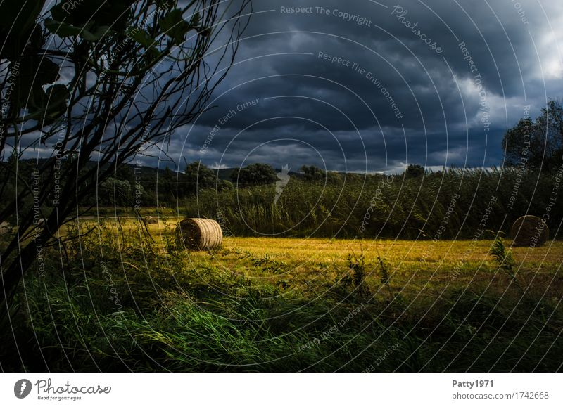 Blue Summer Landscape Dark Environment Yellow Meadow Field Threat Gale Thunder and lightning Storm clouds Hay bale Hay roll