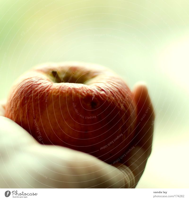 Nature Old Hand Beautiful Eating Healthy Fruit Food Skin Contentment Fresh Nutrition Wrinkle Apple Thin Appetite